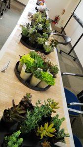イベント出張多肉植物教室